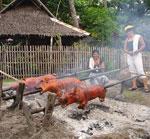 lechon in Malatapay